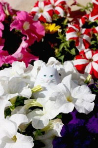 Flowers all around me