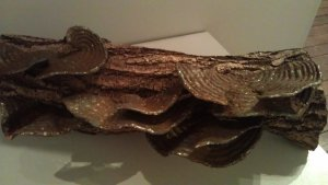 Turkey Tail Fungus by Will Carr - wood and steel sculpture