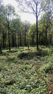 Forested meadow