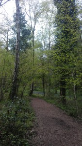 Another great picture of walking trails :)