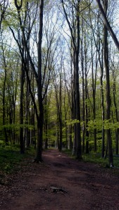 A typical Queenswood trail