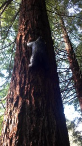 Climbing the Redwood tree