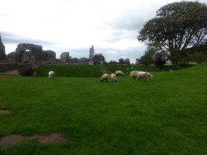 And the grazing flock not bothered by flocks of tourists