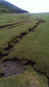 The constant tides have left a permanent scars  along the flooding fields
