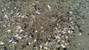 We love sea shells - we have gathered an entire bucket!
