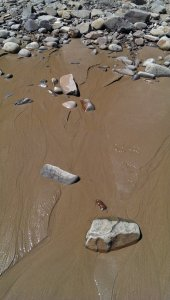 Tiny streams at the beach - sea water returning to the ocean