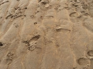 Foot prints  - humans and animals. The dogs are welcomed to the beach
